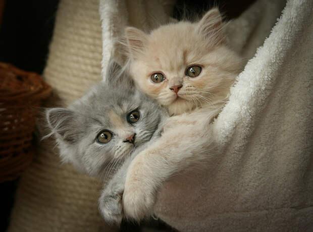 Веселые котята для улыбки (12 фото) — Смешные картинки и веселые ...