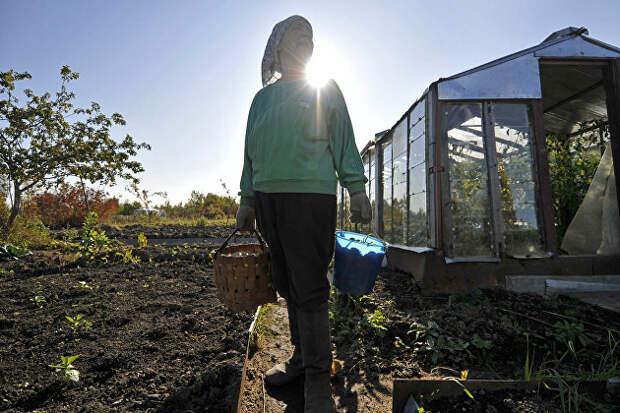 Агроном рассказал, как жара повлияет на урожай овощей и фруктов