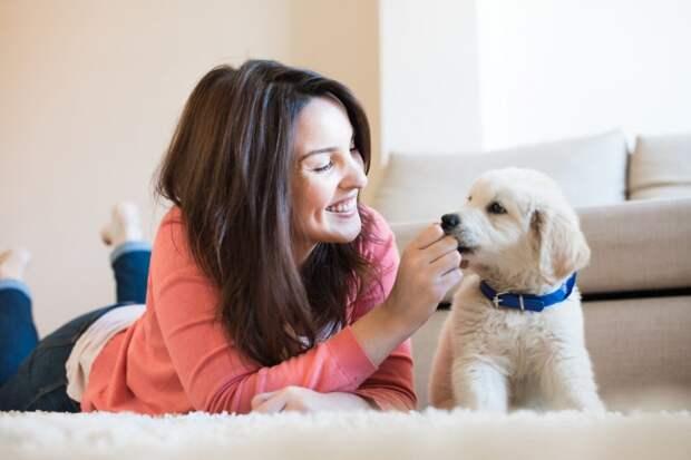 Вот почему собаки так часто ″любят чужих″ еще сильнее, чем ″своих″