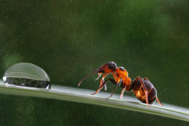"""Понятен ли вам парадокс """"муравья на резиновом тросе""""?"""