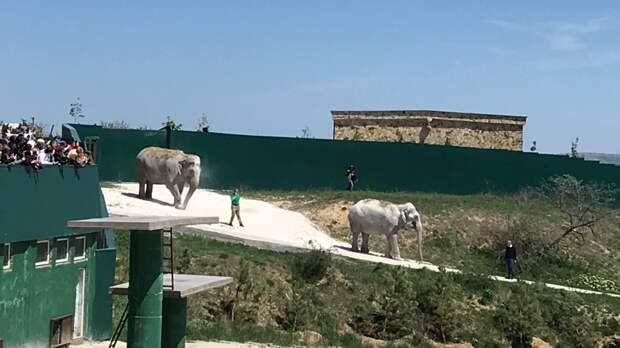 Старые животные из российских цирков будут доживать свои дни в Крыму