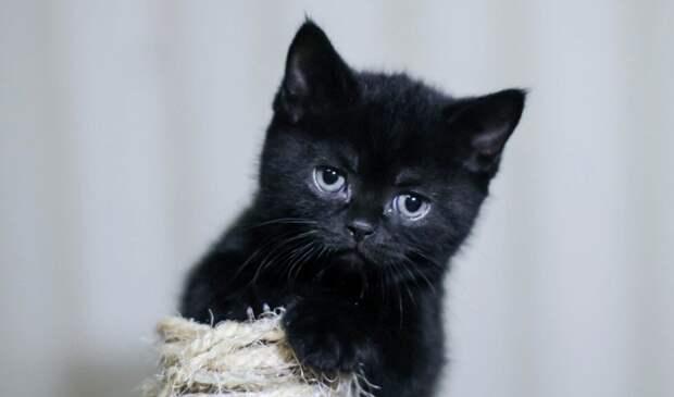 Котенок из магазинной ячейки