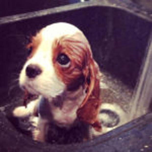 Доказательства того, что собаки — самые милые животные в мире!