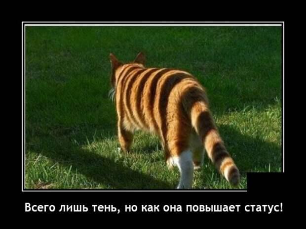 Демотиватор про кота и тень