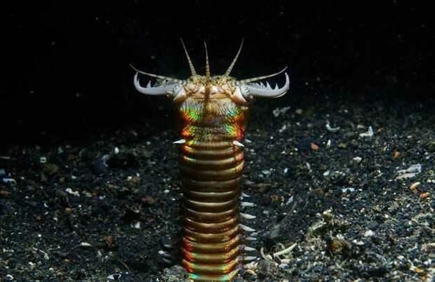7 удивительных и необычных существ, похожих на монстров