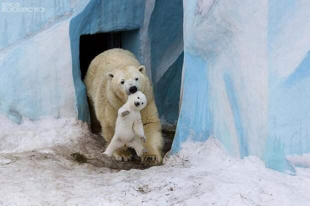 Родители и их дети в царстве животных..