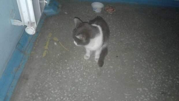 Кошка проехала 800 км под капотом машины, пережила издевательства и, в итоге, нашла дом