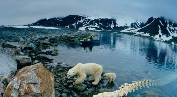 Смещение ареала северных кустарников позволит Арктике снова зацвести