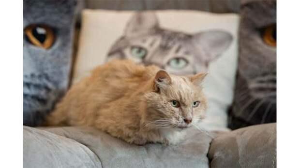 Кот вернулся домой спустя три года пропажи. Его хозяева видят в этом мистику