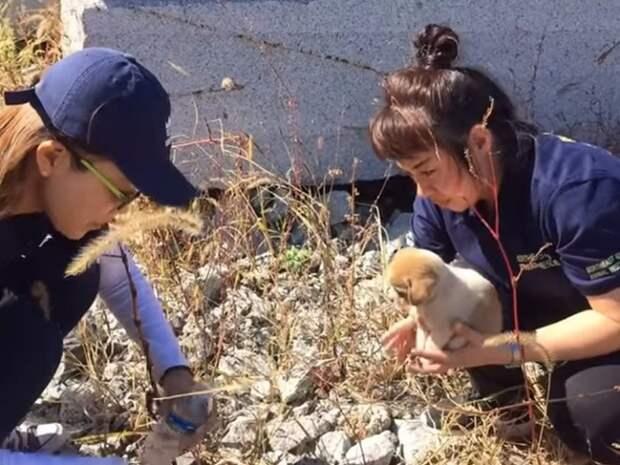 Среди кирпичей прятался испуганный щенок. Он потерялся и ждал спасения