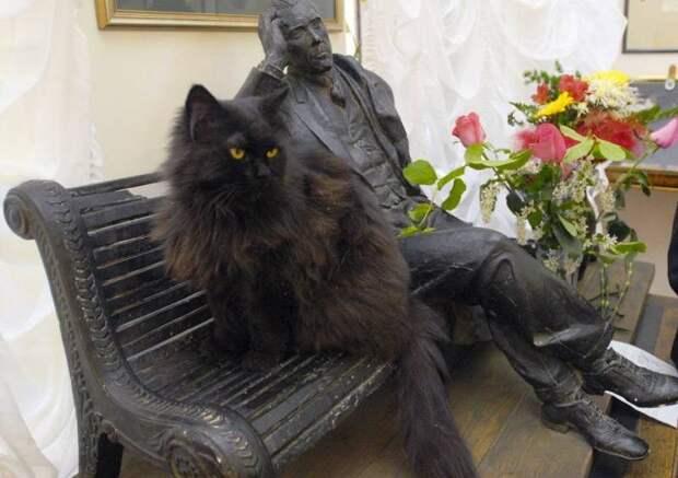 После похищения кота были отменены несколько экскурсий ynews, кот, кот бегемот, музей, музей Булгакова