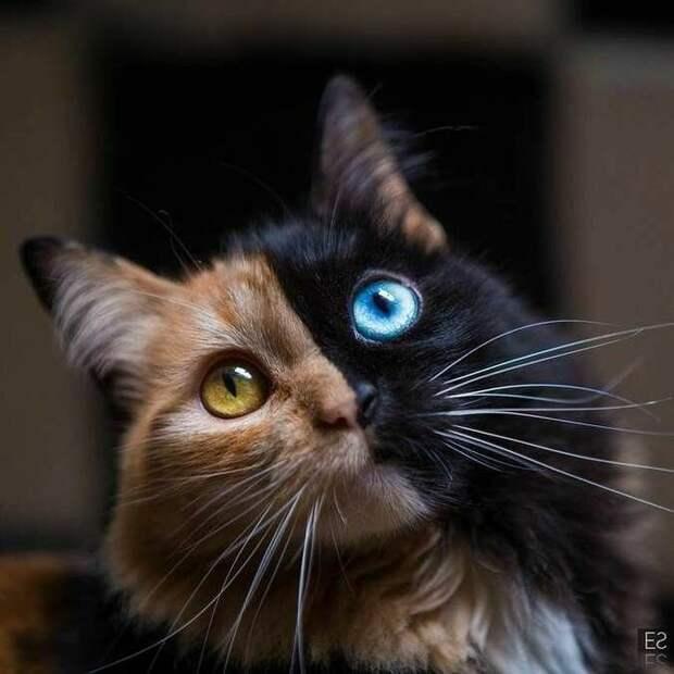 Почему коты ведут себя так странно?