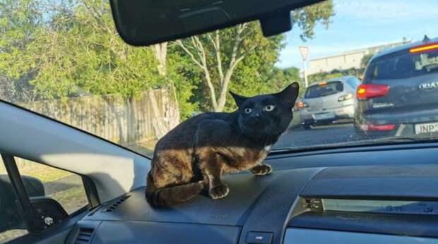Бездомный кот тайком проник в авто к девушке. Когда та везла дочь в школу, МУРлыка всех напугал своим появлением