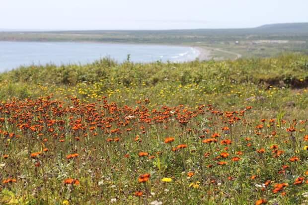 Красоты России. Редкие, но еще не исчезнувшие: что нашли ботаники на острове Итурупе