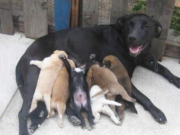 Четвероногие мамашки, которые неимоверно гордятся своими щенками!