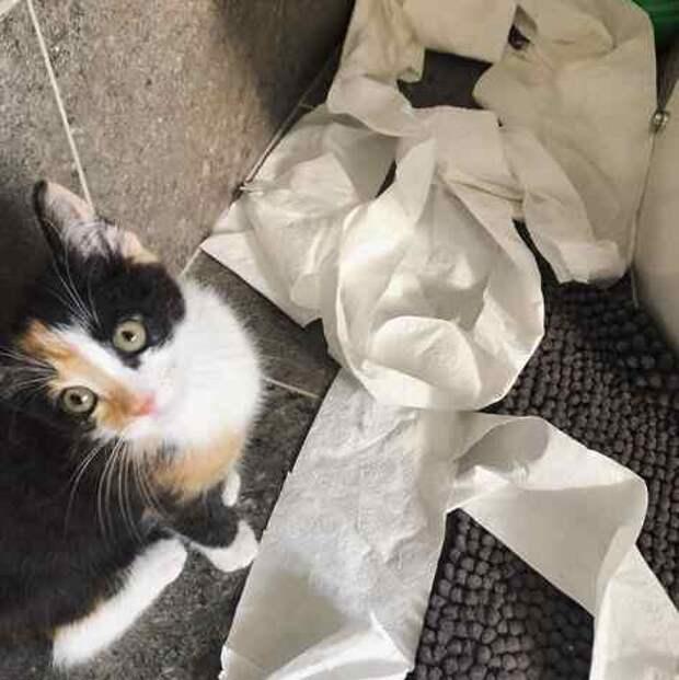 Вот кто больше всего обрадовался огромным запасам туалетной бумаги дома!