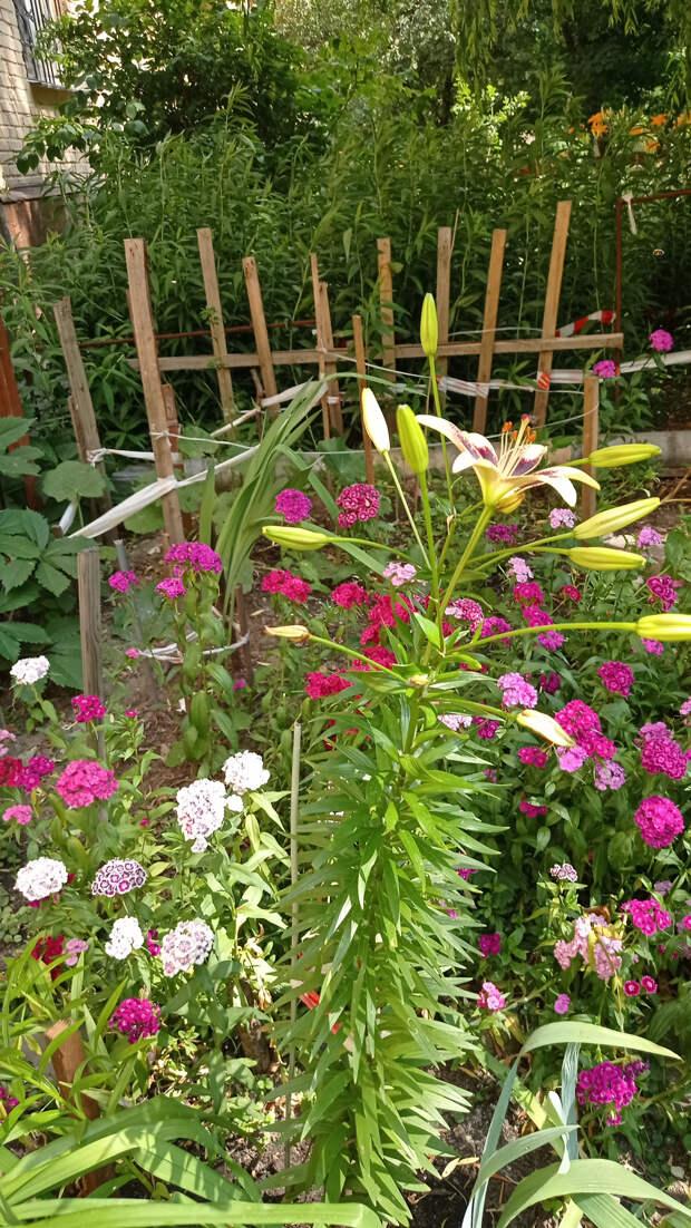 Сад за июль