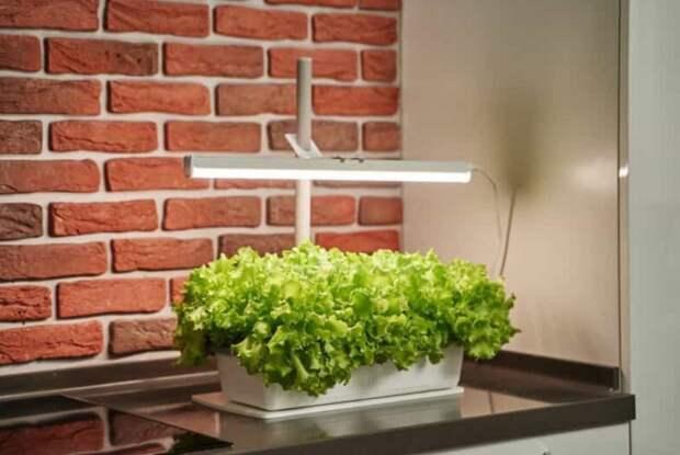 Досветка растений в домашних условиях