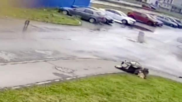 В Ульяновске начала проверку после нападения собак на пса инвалида-колясочника