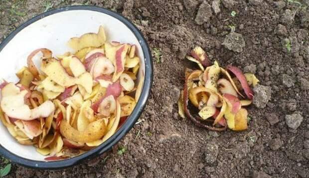 Применение очистков картофеля в огороде