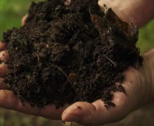 Эффективные и неожиданные способы применения чайных пакетиков в саду