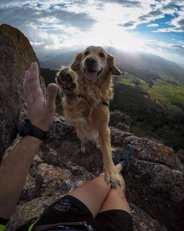 Фото с собакой на вершине горы