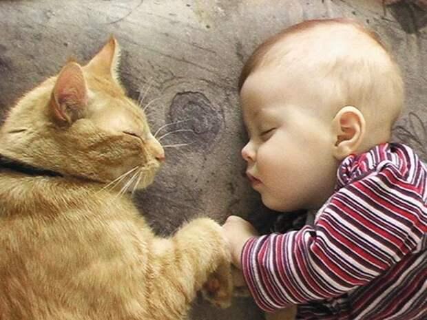 21 очаровательная фотография малышей в компании котов
