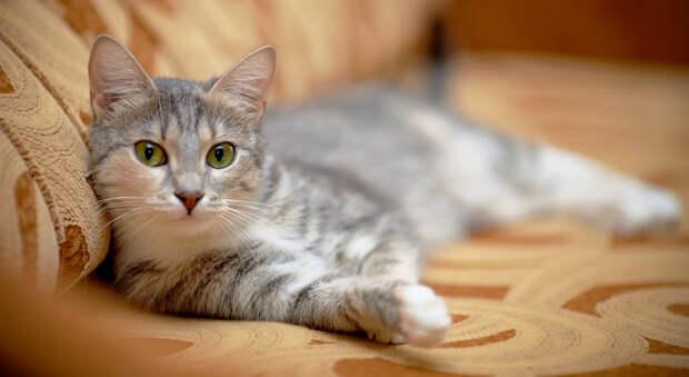 Как кошки определяют, который час?