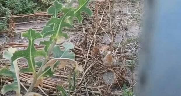 Рыжего котёнка вывезли в лес и оставили среди зарослей без единого шанса на выживание. Он уже отчаялся, но я ему помогла