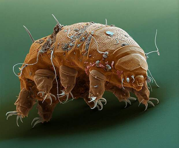 Микропия