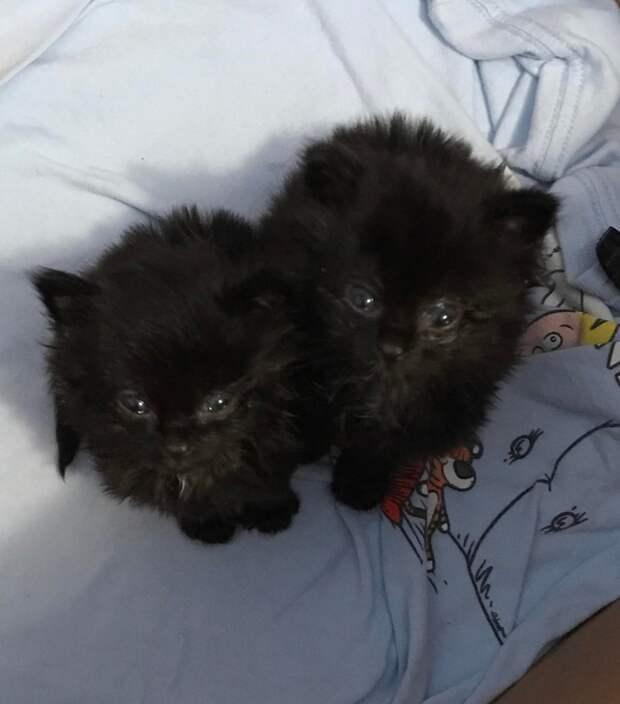 Испуганный грязный котенок превратился в шикарного малыша благодаря доброй девушке
