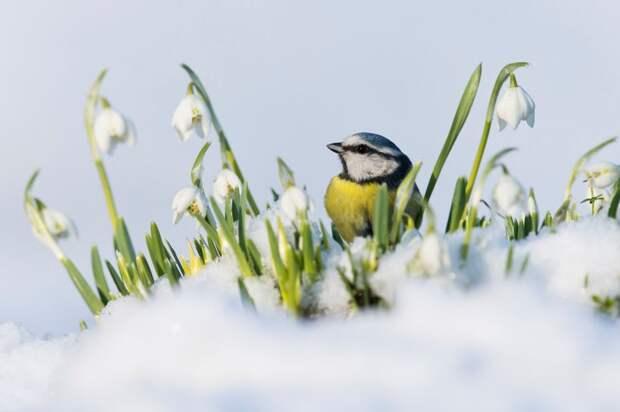 Главные победители Wildlife Photographer of the Year