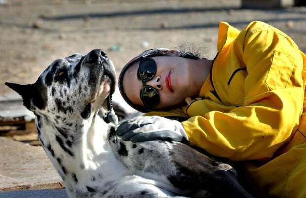 Это приют для животных в Тегеране, Иран, которые был создан на пожертвования в 2004 году