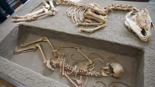 Древний погребальный комплекс скифов восстановили в алтайском музее.