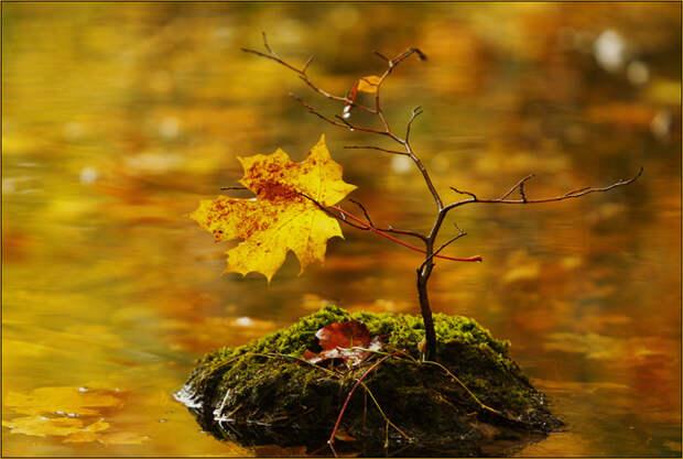 Осень и дети. ДамоПедия