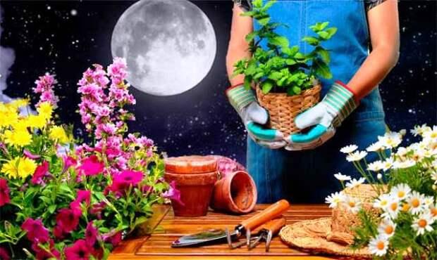 Лунный календарь цветовода и садовода на 2019 год: пересадка и посадка!
