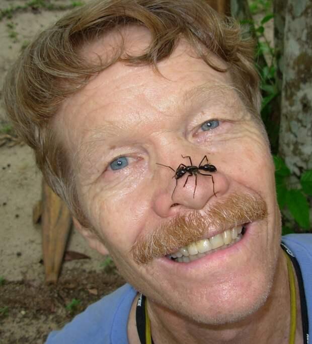Энтомолог испытал на себе самые болезненные укусы насекомых и составил шкалу боли