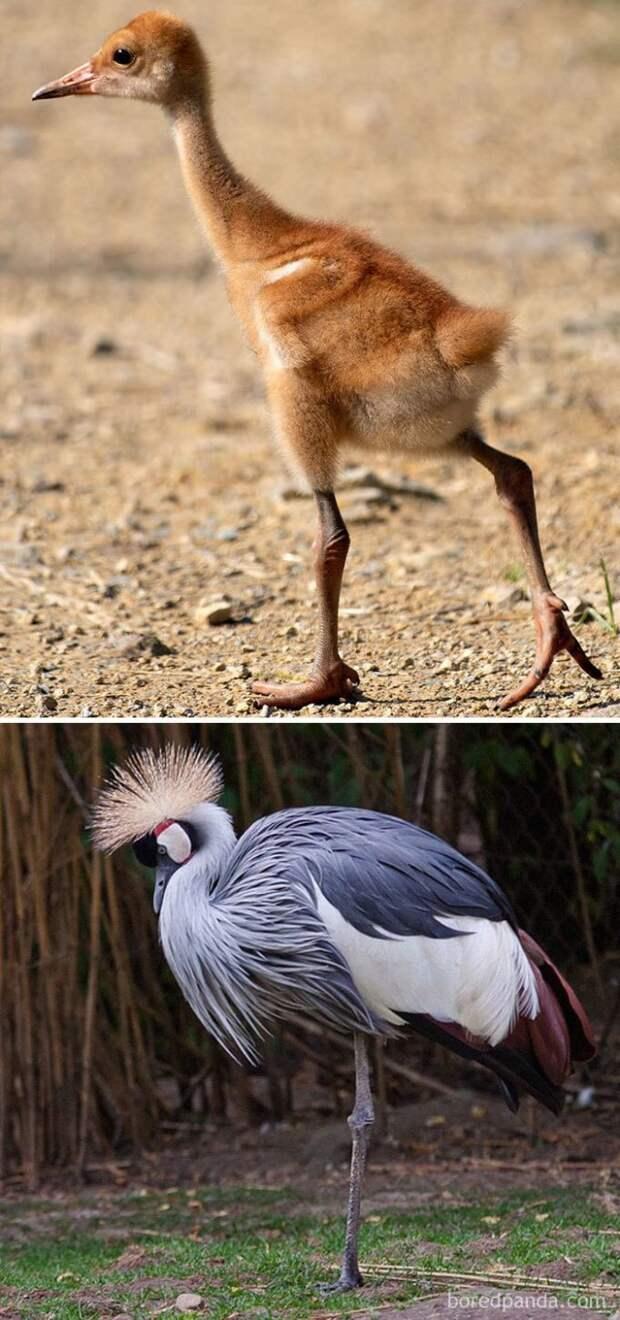 Как выглядят птенцы некоторых птиц