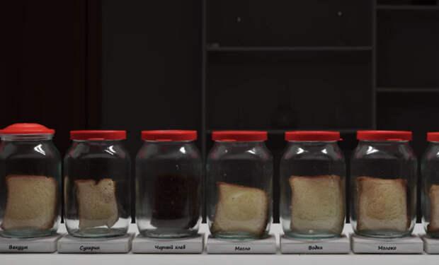 Где быстрее появляется плесень: экспериментатор пропитал хлеб напитками, положил в банку и стал ждать