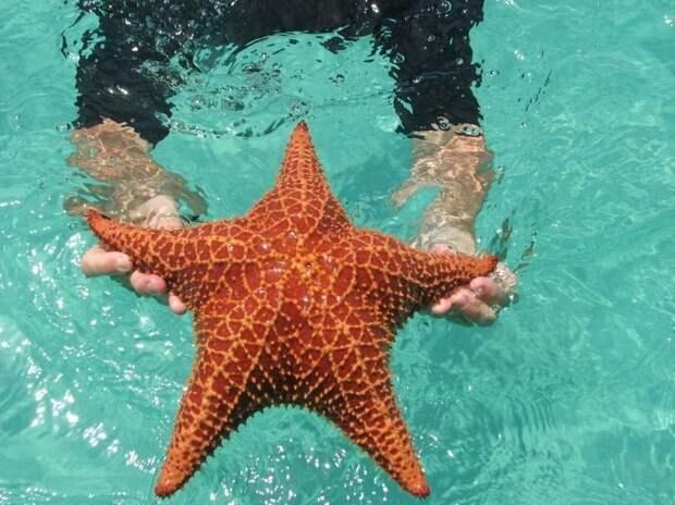 Пляж морских звезд - Бока дель Драго
