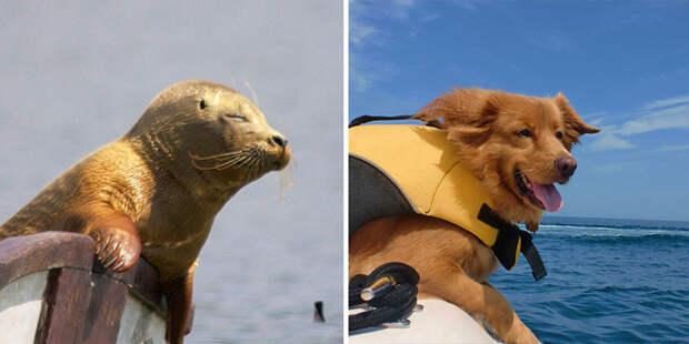 39.  животные, собака, сходство, тюлень