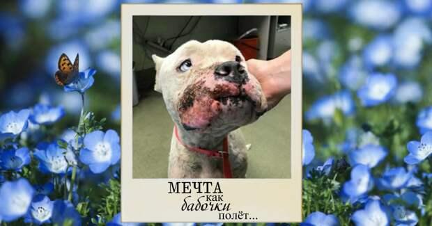 У него глаза измученного ребёнка… Самый добрый, доверчивый и грустный пёс мечтает о том, кто залечит его душевные раны!