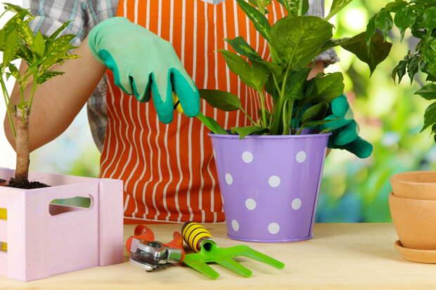 Комнатные цветы: делим, пересаживаем, рассаживаем