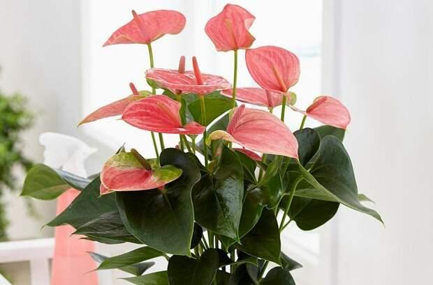 Практичнее, чем букет: 5 красивых комнатных цветов, которые можно подарить на праздник