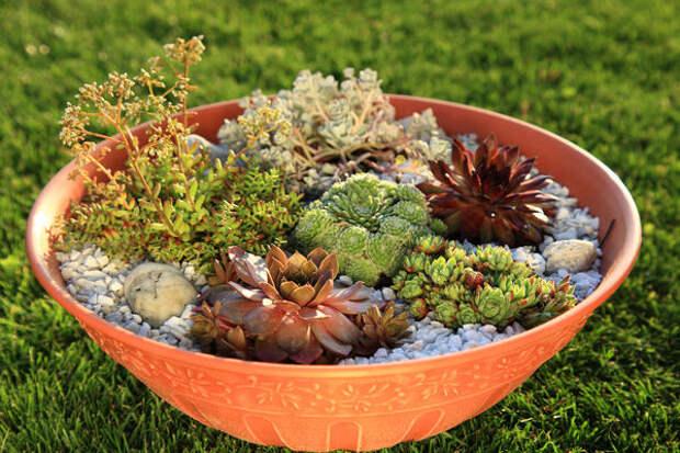 Небольшой сад камней можно создать даже в обычной керамической плошке