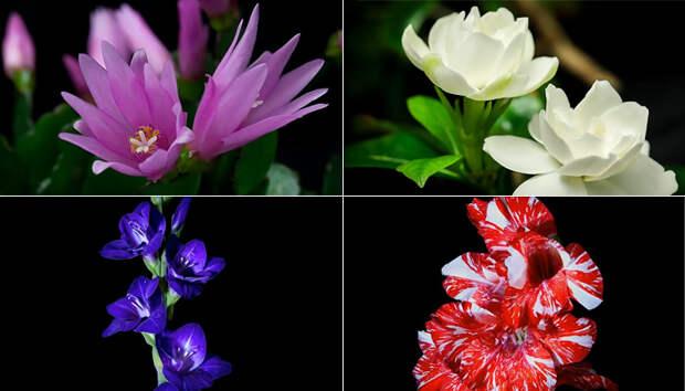 Восхитительное таймлапс видео: как распускаются цветы