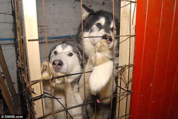 Ветеринар собирал бездомных животных, но когда полицейские вскрыли его подвал...