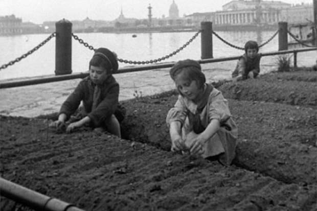 Высадка овощей в блокадном Ленинграде