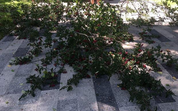 За два года в двух крупных рязанских парках срубили более 60 деревьев