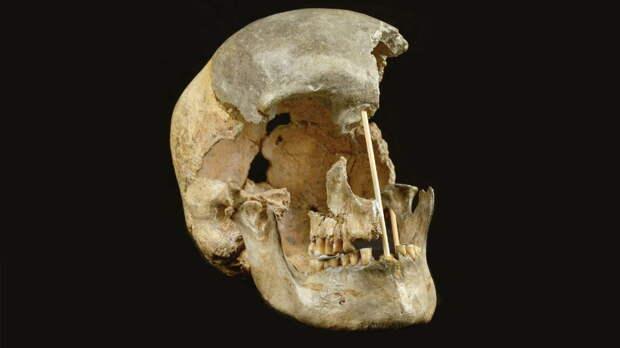 """Исследование: Homo sapiens избежали исчезновения благодаря """"творческим"""" генам"""